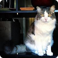 Adopt A Pet :: Utah - Mission Viejo, CA