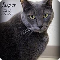 Adopt A Pet :: Jasper - Gaylord, MI