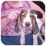 Photo 1 - Treeing Walker Coonhound Puppy for adoption in Buffalo, New York - John Boy: Long on ears!