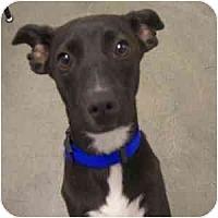 Adopt A Pet :: Pepe - Phoenix, AZ