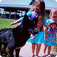 Adopt A Pet :: BUDDY - Glastonbury, CT