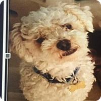 Adopt A Pet :: Hans - Scottsdale, AZ
