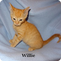 Adopt A Pet :: Willie - Bentonville, AR