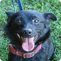 Adopt A Pet :: Eddie - Erwin, TN