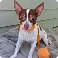 Adopt A Pet :: Lester - Baton Rouge, LA
