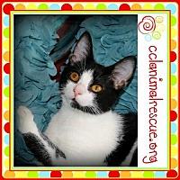 Adopt A Pet :: Mica - Panama City, FL