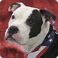 Adopt A Pet :: Ace - Cincinnati, OH