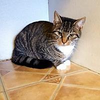 Adopt A Pet :: Alfie - Fairmont, WV