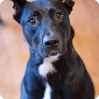 Adopt A Pet :: Savannah (bonded to Jasna) - Bowie, MD