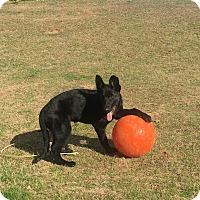 Adopt A Pet :: Lenya - Dacula, GA