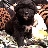 Adopt A Pet :: Devonta - Milton, GA