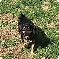 Adopt A Pet :: Jonah - Springfield, MO