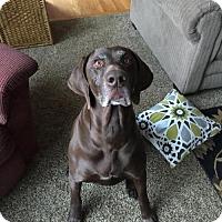 Adopt A Pet :: Gunner - Cedar Rapids, IA