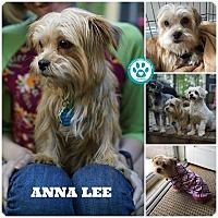 Adopt A Pet :: Anna Lee - Kimberton, PA