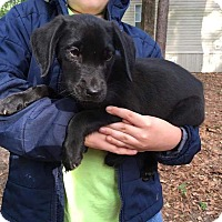 Adopt A Pet :: LD2 - Hanover, PA