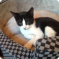 Adopt A Pet :: Wobble - Brooklyn, NY