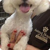 Adopt A Pet :: Leo - Lancaster, OH