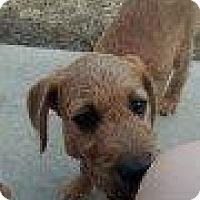 Adopt A Pet :: Mikey - Alliance, NE