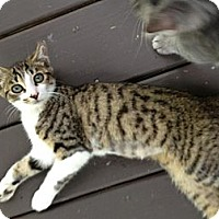 Adopt A Pet :: Rachel (Slip) - Monroe, GA