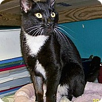 Adopt A Pet :: Whiskers - Dover, OH