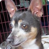 Adopt A Pet :: BELLA - Anderson, SC