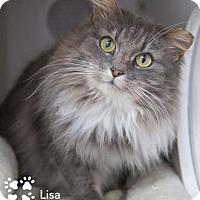 Adopt A Pet :: Lisa - Merrifield, VA