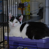 Adopt A Pet :: Angie - Trevose, PA