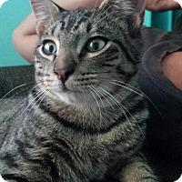 Adopt A Pet :: JAVI - Ridgewood, NY