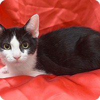 Adopt A Pet :: Kirby - Chattanooga, TN