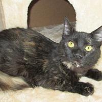 Domestic Mediumhair Cat for adoption in San Bernardino, California - Bronwyn