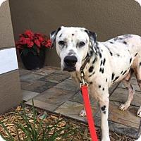 Adopt A Pet :: Mr. Potter - Tampa, FL