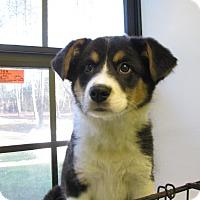 Adopt A Pet :: Verde - Groton, MA