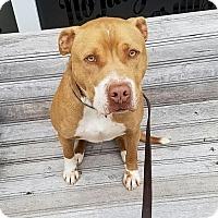 Adopt A Pet :: Zeus (CL) - Greensboro, NC