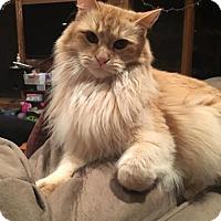 Adopt A Pet :: Jack - Absecon, NJ