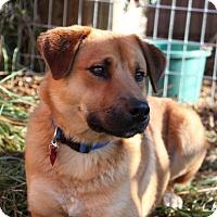 Adopt A Pet :: Truman *pending adoption - Eugene, OR