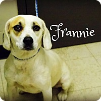 Adopt A Pet :: Frannie - Defiance, OH