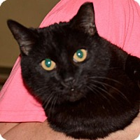 Adopt A Pet :: Inky - Glendale, AZ