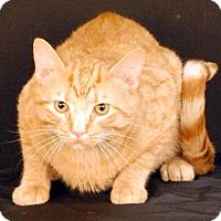 Adopt A Pet :: Gee Gee - Newland, NC