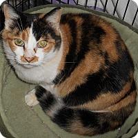 Adopt A Pet :: Cali - Chattanooga, TN