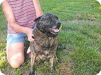 Australian Cattle Dog Mix Dog for adoption in Rayville, Louisiana - Graycee