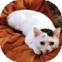 Adopt A Pet :: Chloe - Vancouver, BC