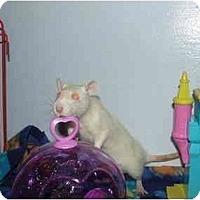 Adopt A Pet :: Holly and  Joy - Hamburg, PA