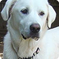 Adopt A Pet :: Katie  *Adopted - Oklahoma City, OK