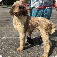 Adopt A Pet :: Boyd - St. Petersburg, FL