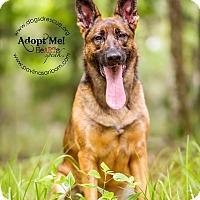 Adopt A Pet :: Jax - Ormond Beach, FL