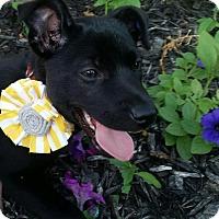 Adopt A Pet :: Tulip - Toledo, OH