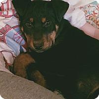Adopt A Pet :: Faust - Las Vegas, NV