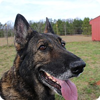 Adopt A Pet :: Diamond - Dacula, GA