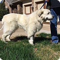 Adopt A Pet :: Glacier  *Adopted - Tulsa, OK