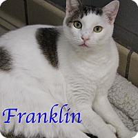 Adopt A Pet :: Franklin - Bradenton, FL